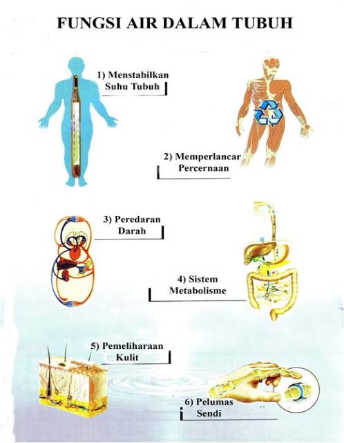 fungsi lemak bagi kesehatan tubuh manusia